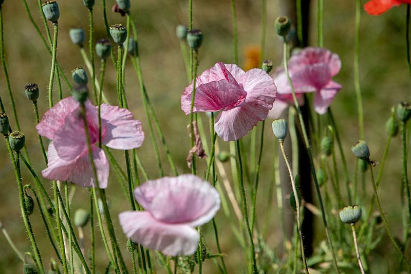 Wiesenblumen bei der Josenmuehle